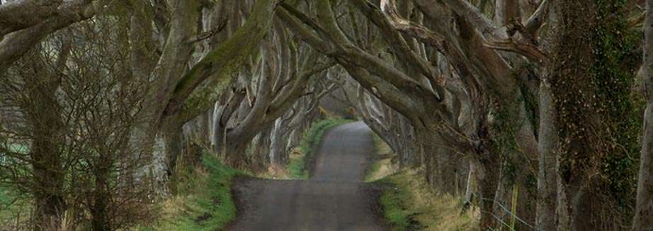 The Dark Hedges, il sentiero incantato