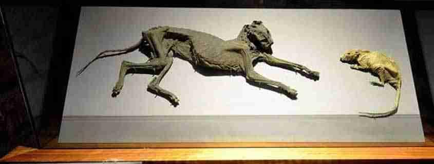 La cripta è abitata anche da 'Cat & Rat'