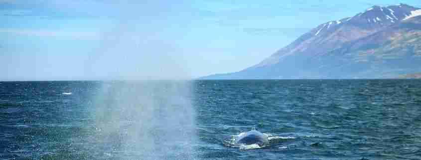 stagione delle balene