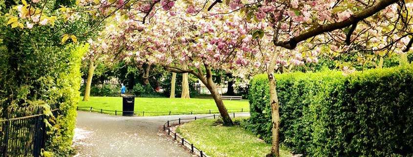 St Stephen's Green in fiore