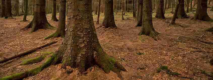 Le foreste di Tollymore