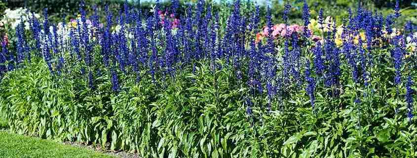 National Botanic Gardens, Kilmacurragh