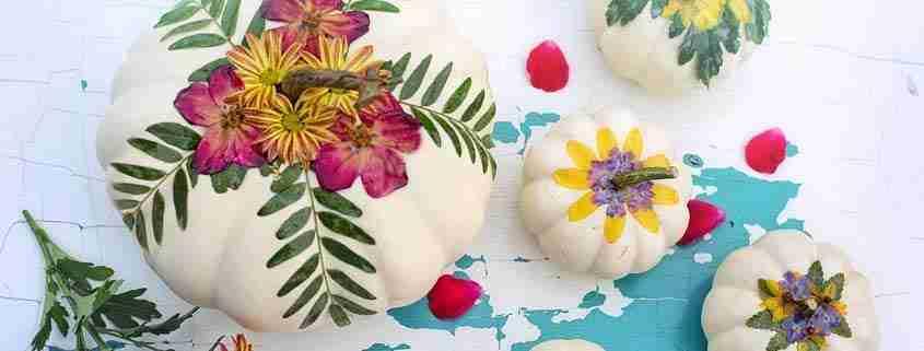 zucche da decorare