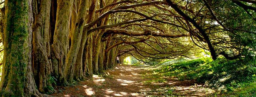 Yew Tree Walk Huntington