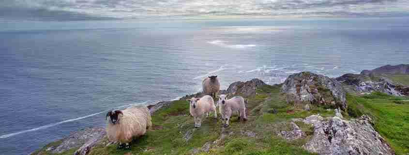 Sheeps Head