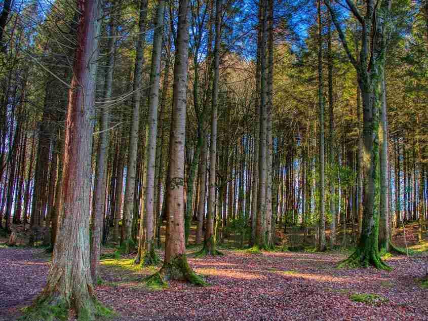 Dooney Rock Forest