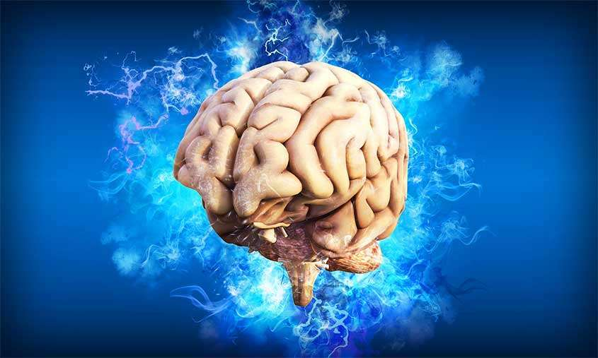 Cervello di panna cotta